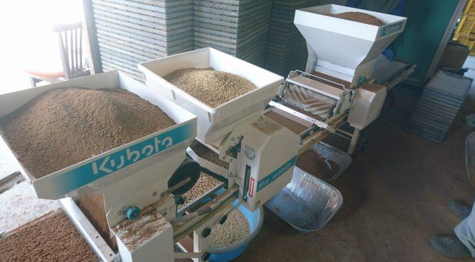 れんげ米の種まき。✨