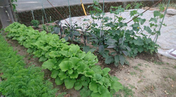 家庭菜園。✨