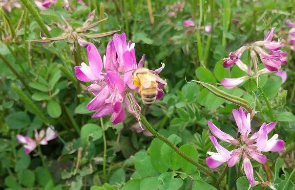 ミツバチの楽園。😂