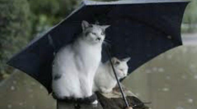 仕事もなく、雨の日にする事といえば